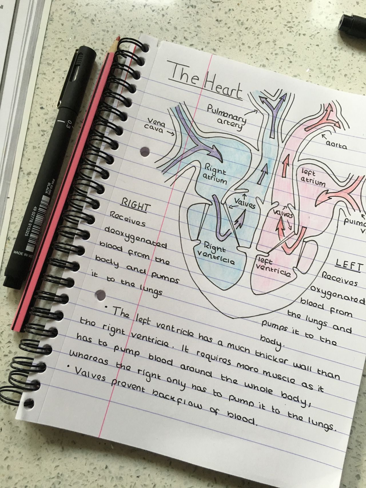 Wish My A P Notebook Had Looked This Good With Images Nursing
