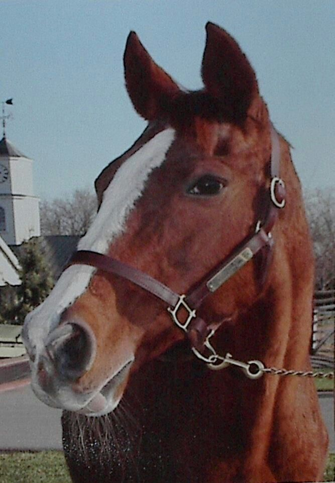 1980 Kentucky Derby WinnerGenuine Risk