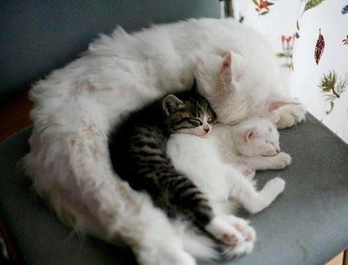 The cat curl.