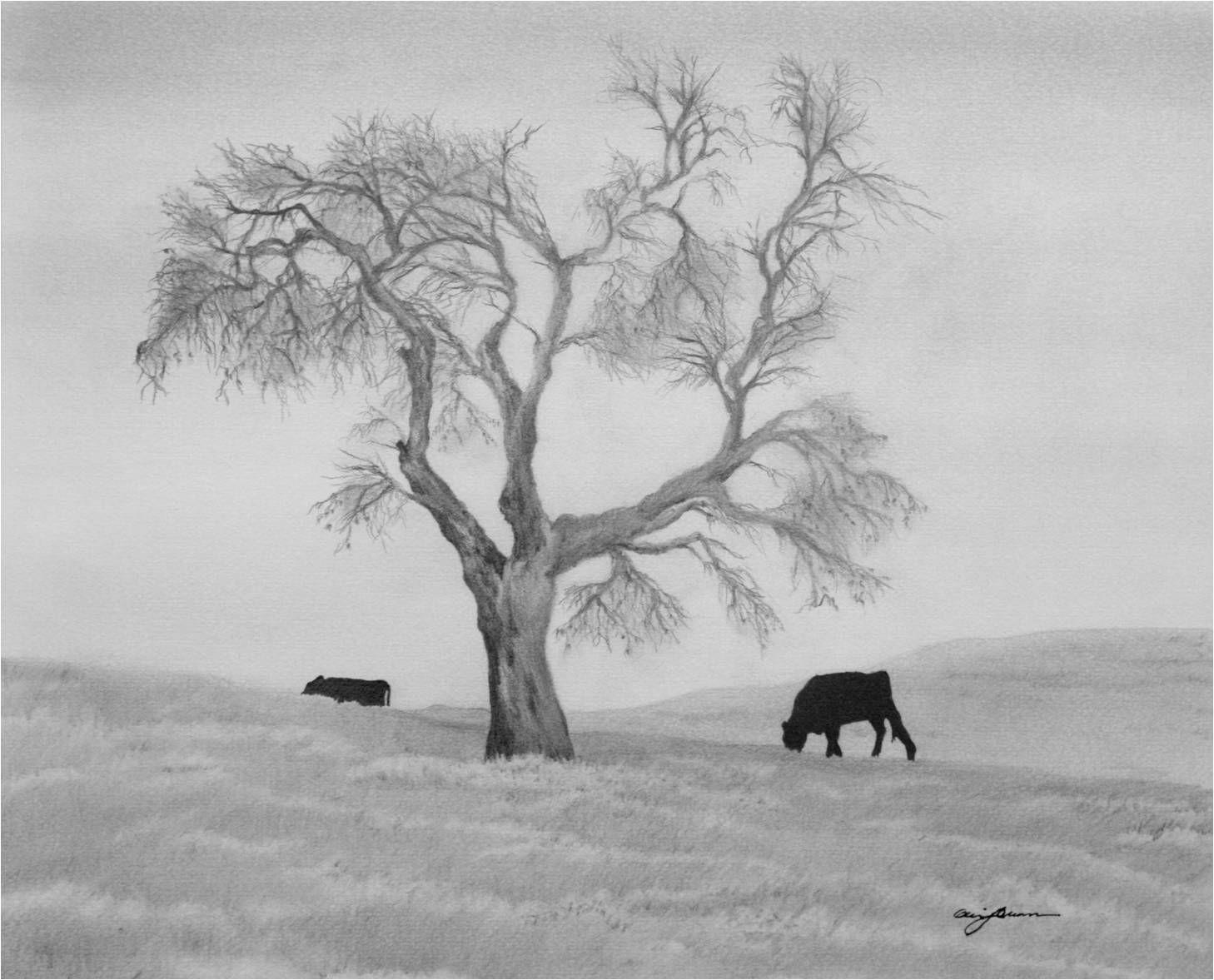 Lone Oak Tree Landscape Pencil Drawings Cool Landscapes Pencil Drawings