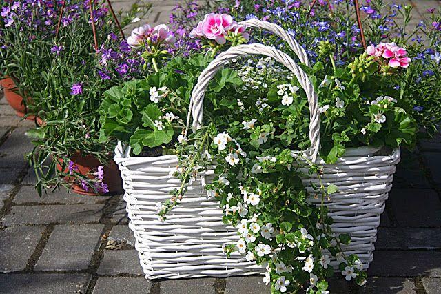 Kompozycje Kwiatowe Ba Balkon Taras I Do Ogrodu Cz 1 Garden Containers Garden Container