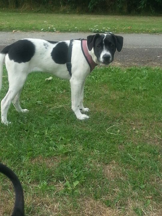 Found On Google From Pets4homes Co Uk Chien