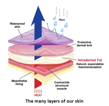 The Many Layers Of Our Skin Health Pinterest Health Cancer