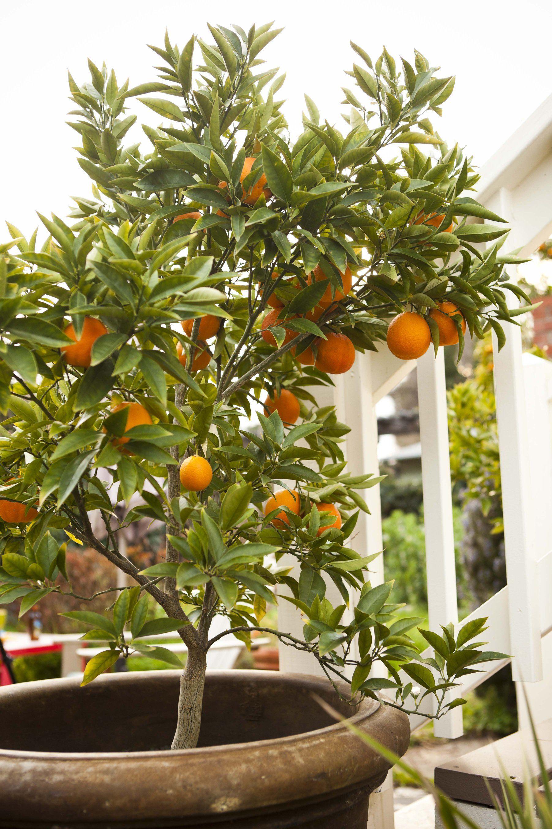 Workman Publishing Indoor Vegetable Gardening Citrus Trees Organic Vegetable Garden
