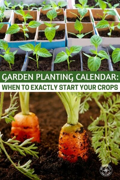 Garden Planting Calendar When To Exactly Start Your Crops Plants And Gardens