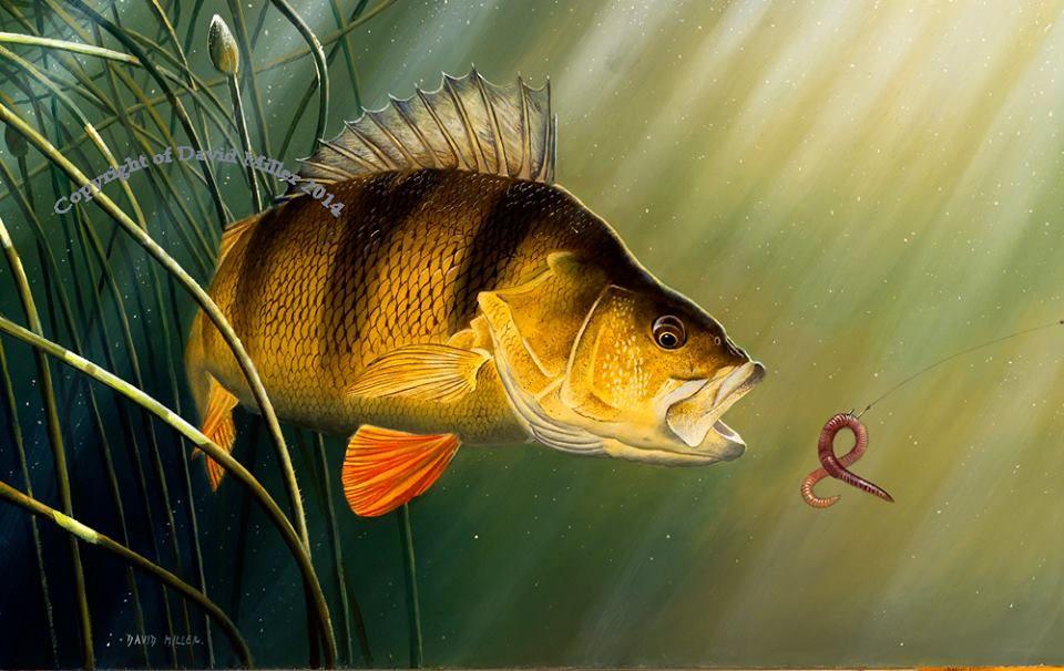 By David Miller With Images Fish Artwork Fish Fish Art