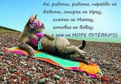 Хочу в отпуск прикольные картинки Смешные фото кошек