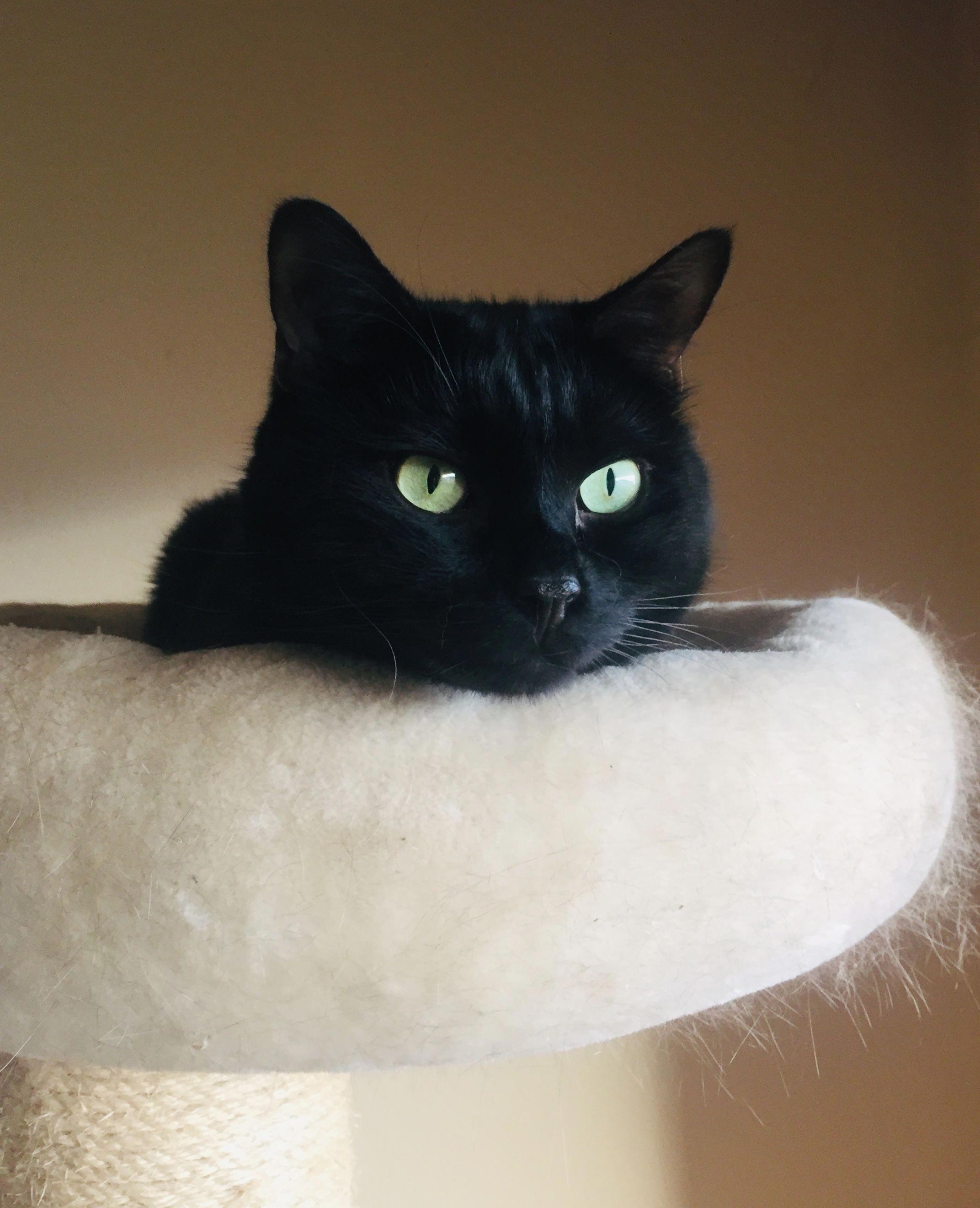 Black Cat Cat Cats Cats Catsaesthetic Cute Cats Black Cat Cat Love