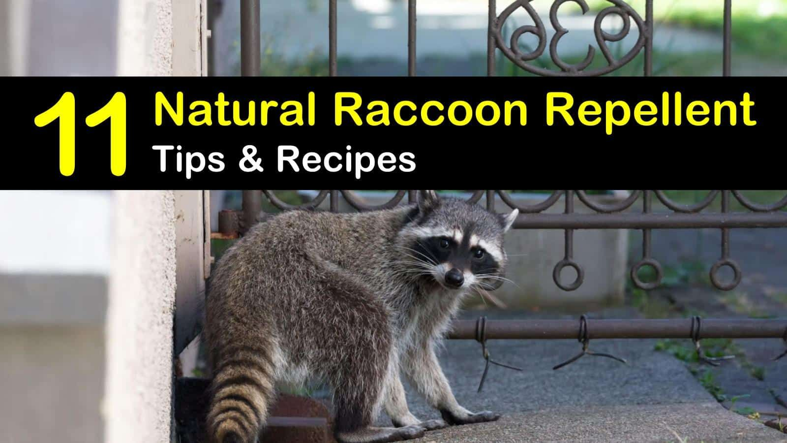 How do you get rid of raccoons on your deck