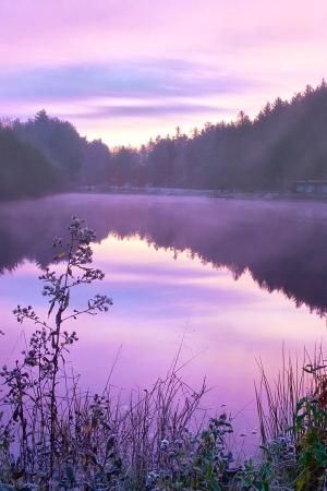 violet by Eva0707
