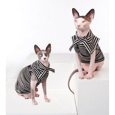 Sphynxcat Wear Hairless Cat Sphynx Cat Cat Clothes