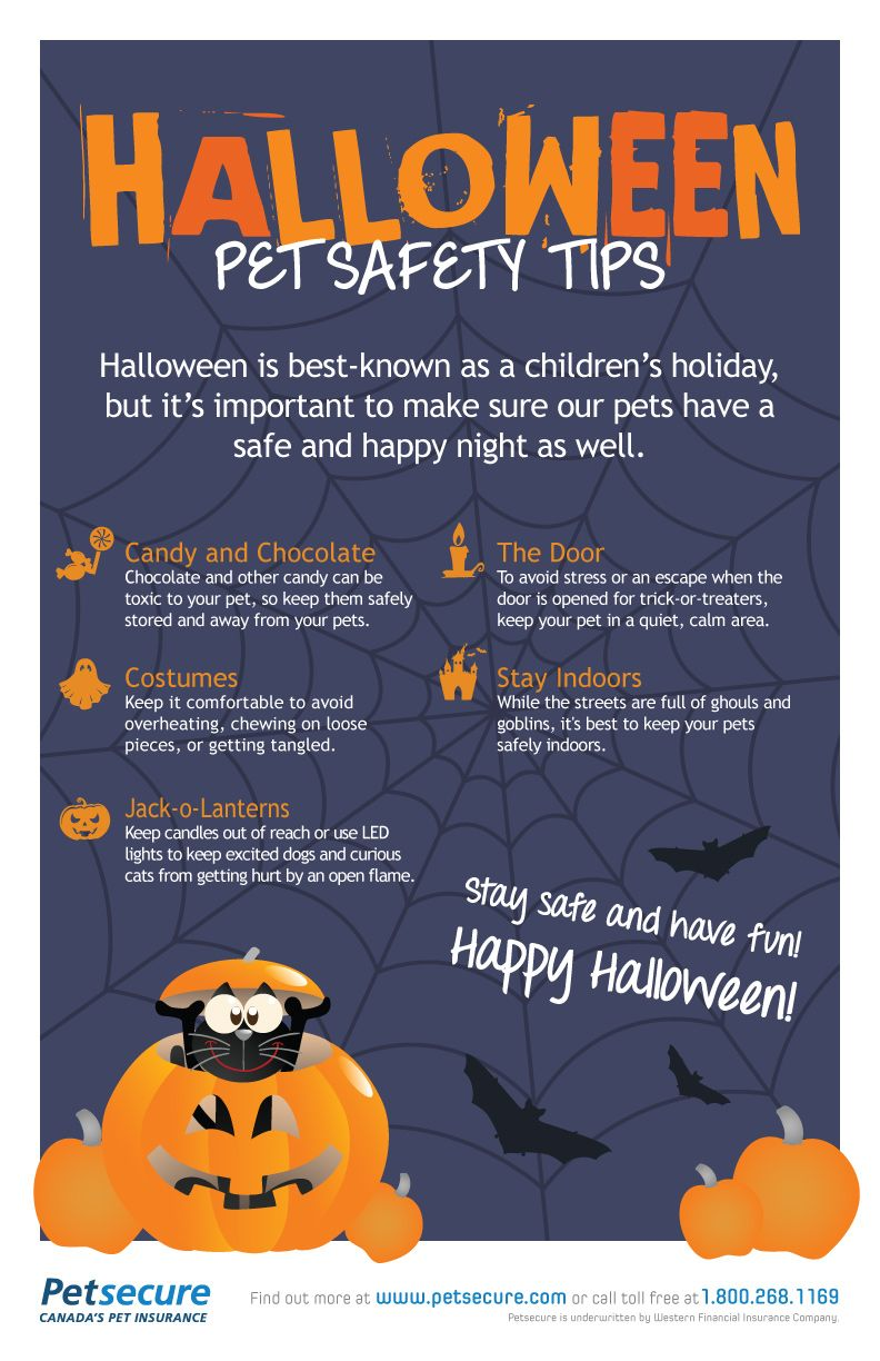 Halloween Pet Safety Tips from Petsecure Halloween pet