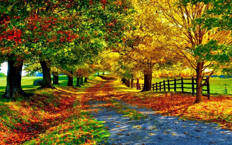 peisaje de toamna superbe Căutare Google Beautiful
