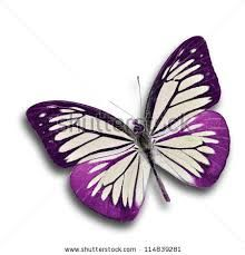 6ae259ed615b0 Image result for purple butterfly species. Find this Pin and more on purple  butterfly cake inspiration by Sara Rocha.
