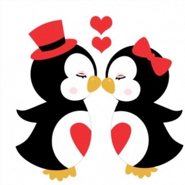 O Pinguim E O Animal Mais Fiel Que Existe Depois De Ter Escolhido