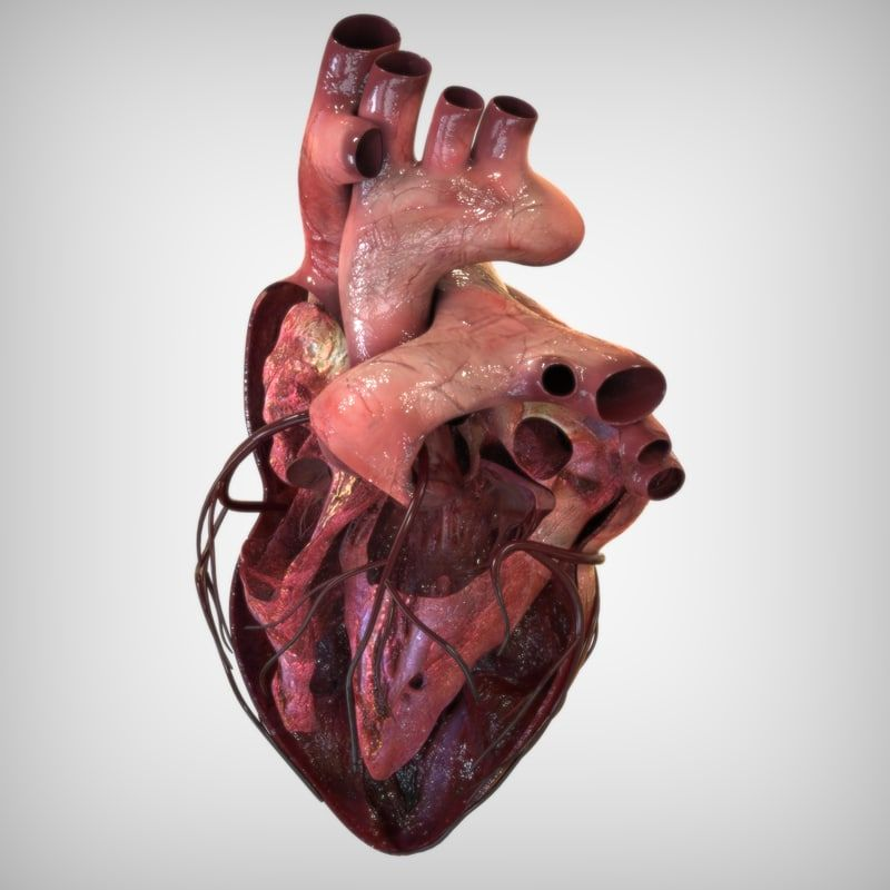 heart anatomy lwo | 3d Anatomy | Pinterest | Heart anatomy, 3d ...