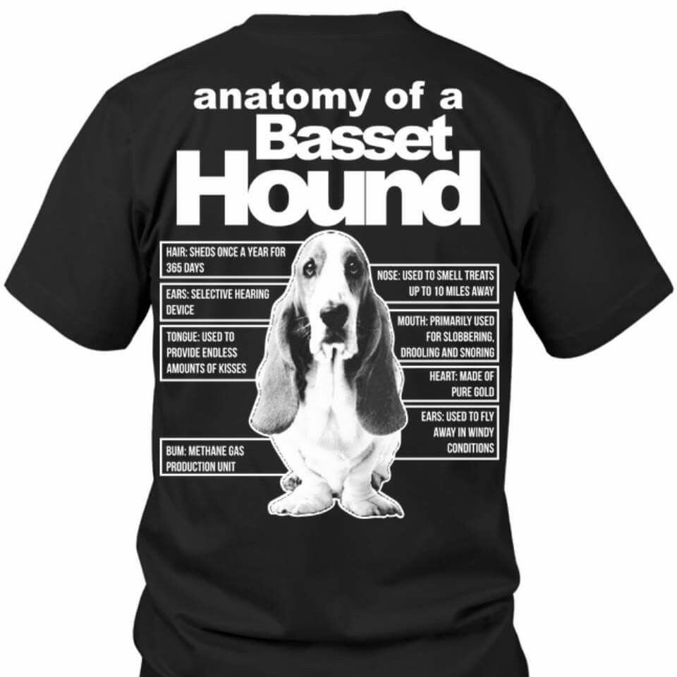Anatomy of a basset hound | Animals | Pinterest | Basset hound ...