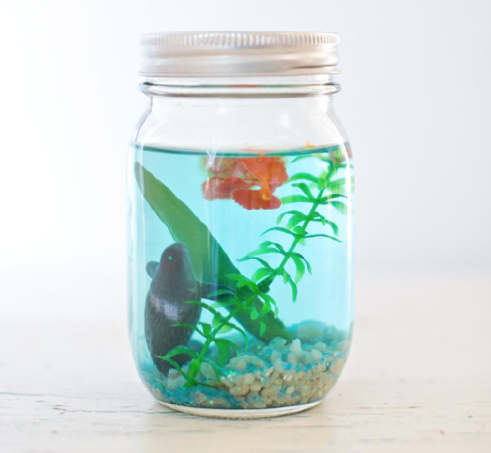 Fabriquez un aquarium dans un pot mason avec vos enfants