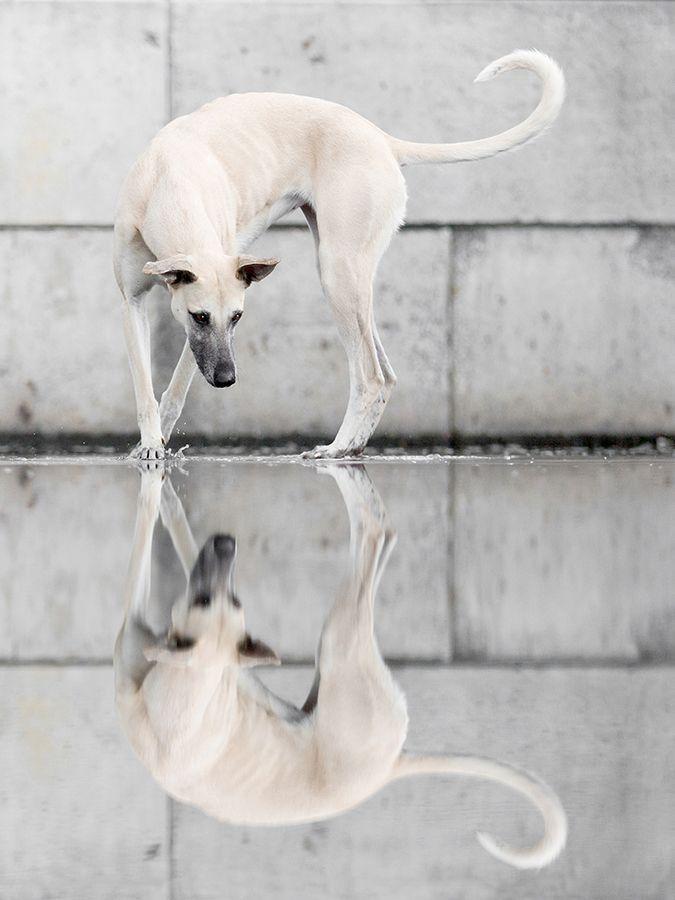Elke Vogelsang Fotografie Doggy Dog Haustierfotografie Tierfotografie Hundefotografie