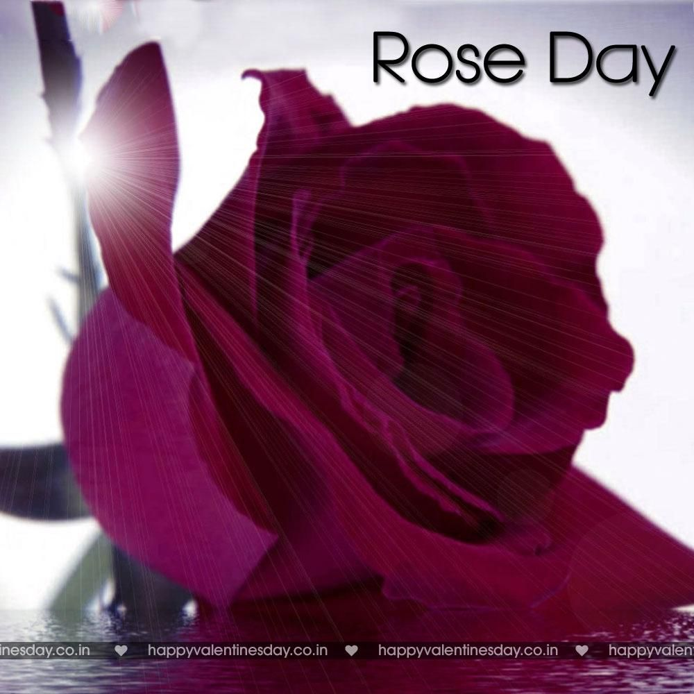 Rose day free online greeting cards free ecards uk online ecards uk m4hsunfo