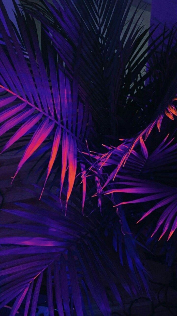 tumblr wallpaper ile ilgili görsel sonucu | Dark purple ...