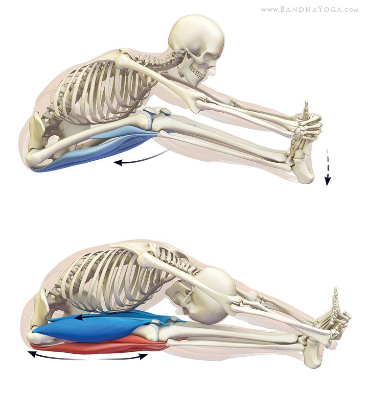 Facilitated Stretching (PNF) for Yoga Loved and Pinned by www ...