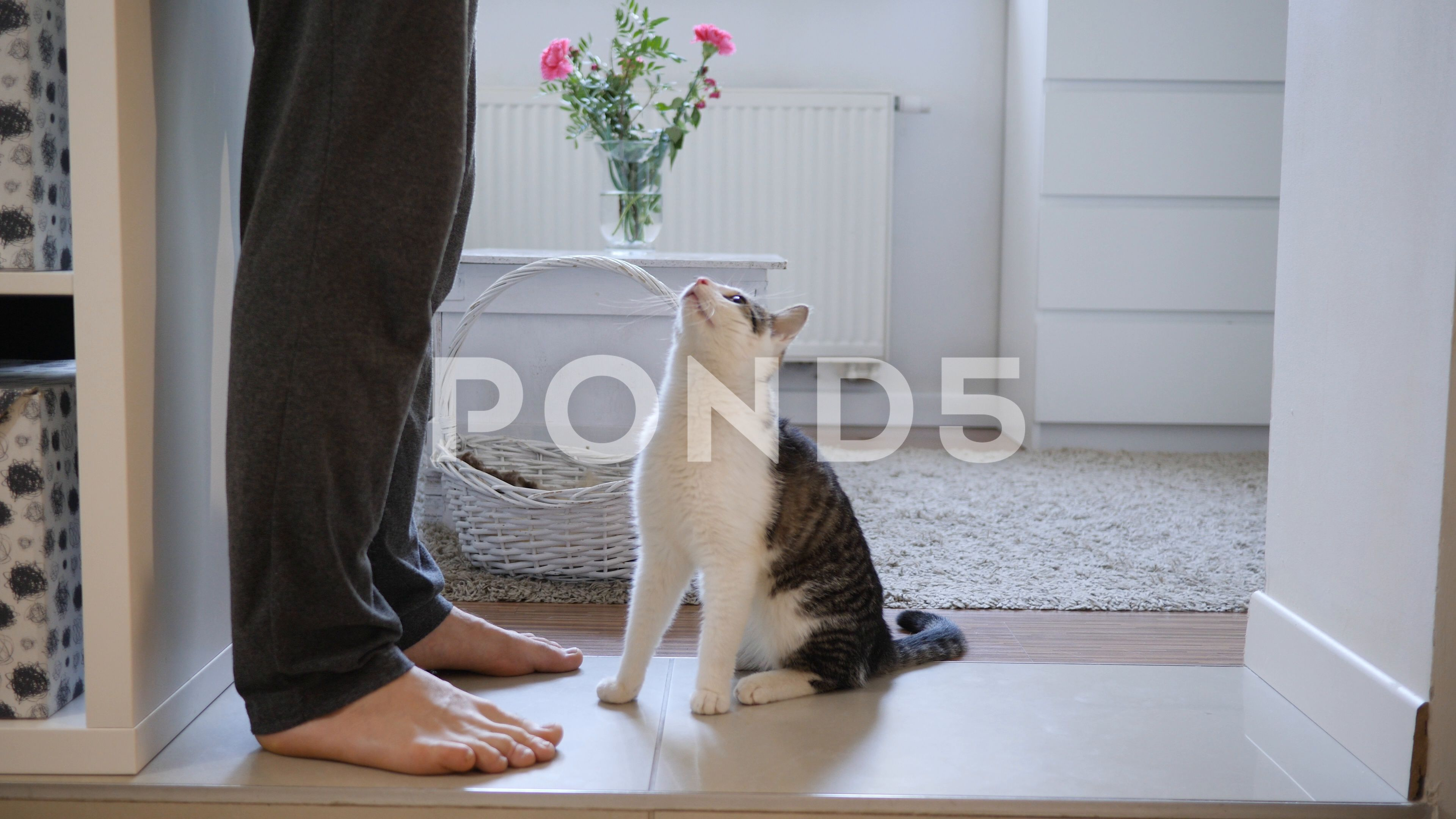 Man Feeds His Pet Animal Cat Giving Him A Food Snack At Home Stock Footage Ad Animal Cat Pet Man With Images Pets Animals Snack Recipes