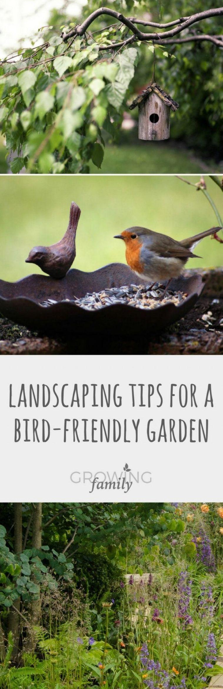 a small garden bird