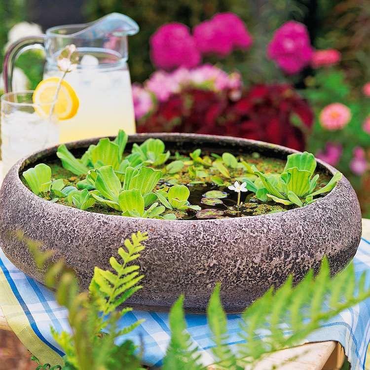 Vous êtes à la recherche d'idées apporter de la fraîcheur à votre espace extérieur ? Installer un mini jardin aquatique est la solution idéale pour attirer
