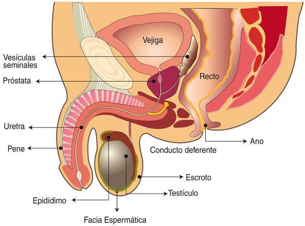 biopsia de próstata y dolor de estómago