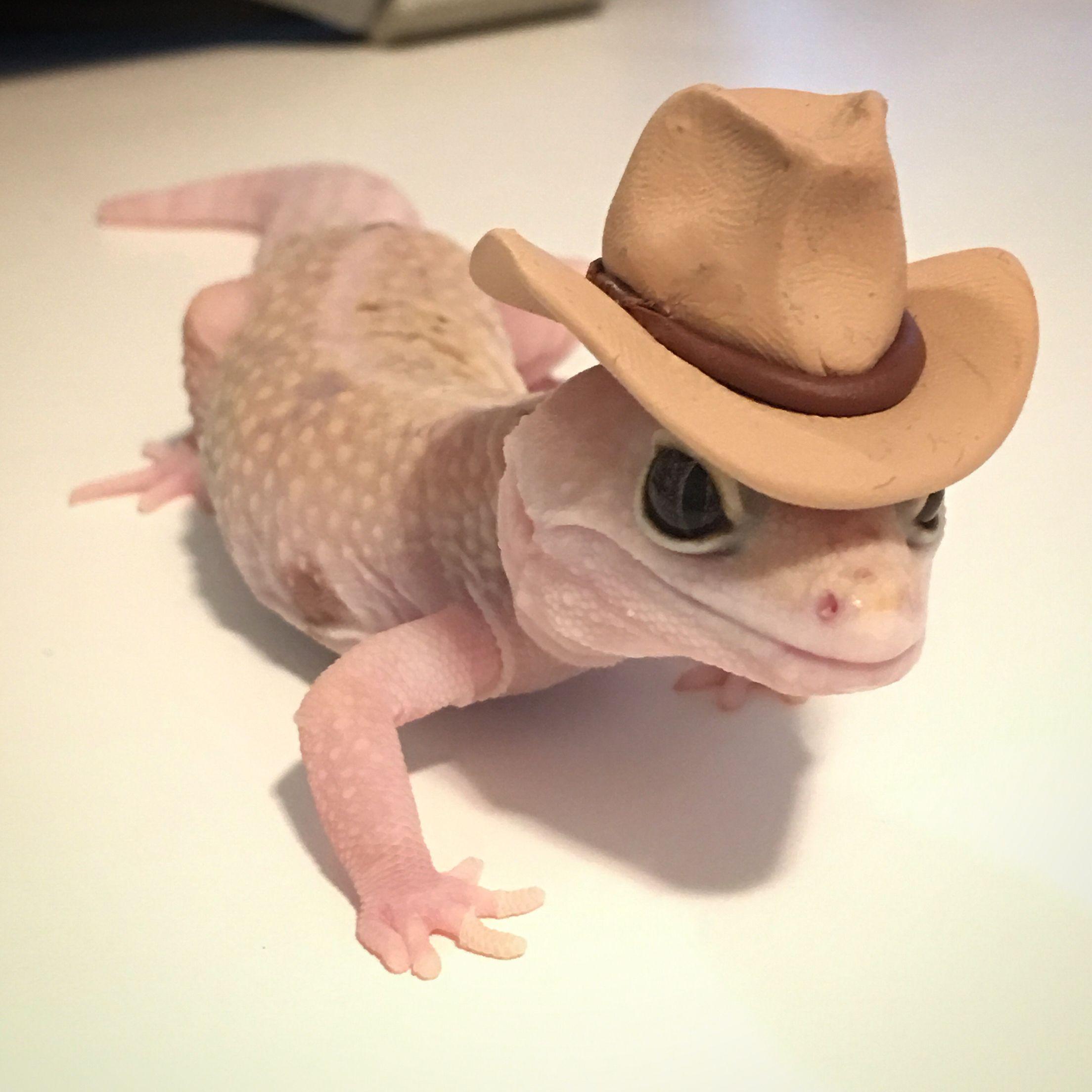 (@meribellehalsema) #leopardgeckos
