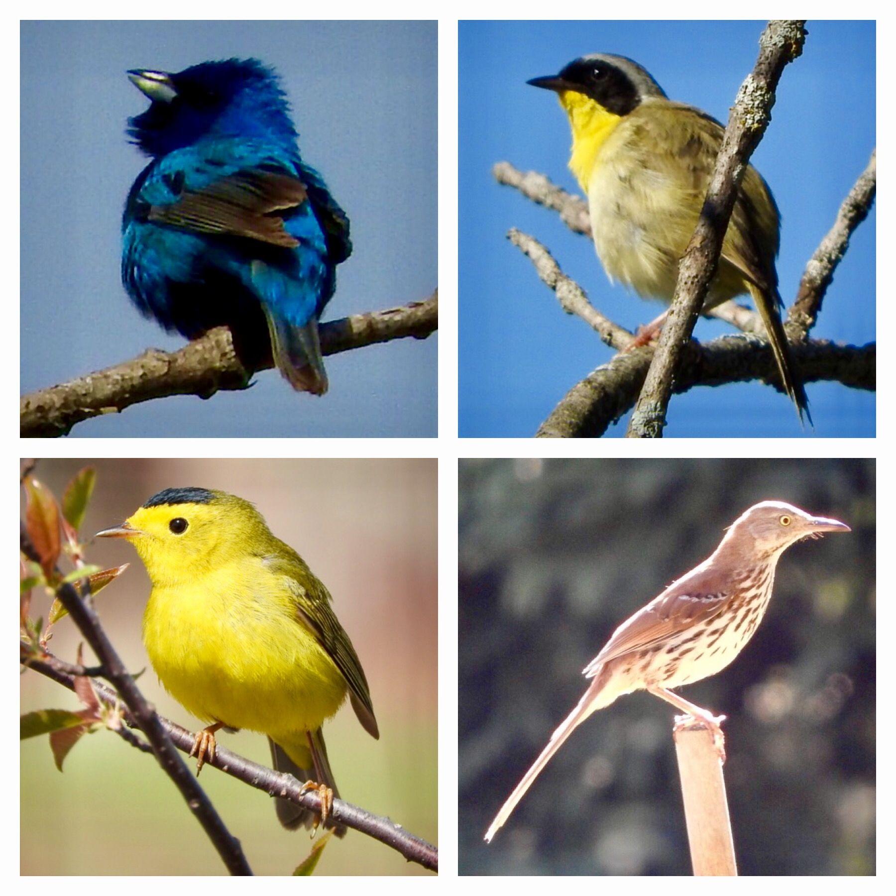 Birds of Summer in Michigan.   Birds, Bird feathers, Animals