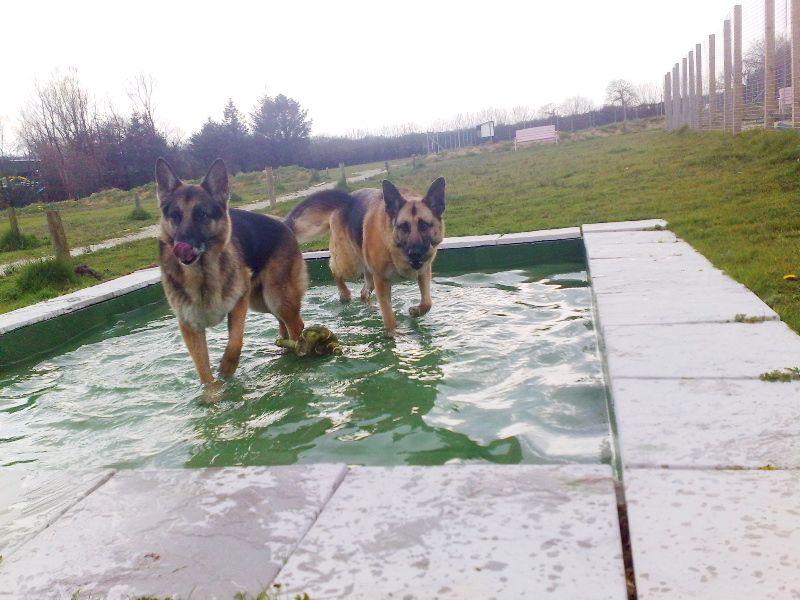 Boarding Kennels Devon Luxury Pet Hotel Cornwall Luxury Dog Kennels Cheap Dog Kennels Dog Boarding Kennels
