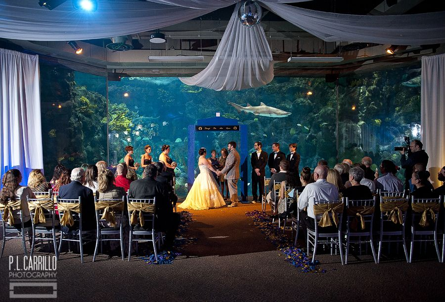 A Florida Aquarium Wedding