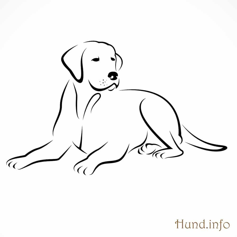 Ausmalbilder mit Hunden en 2020 | Dibujos de perros ...