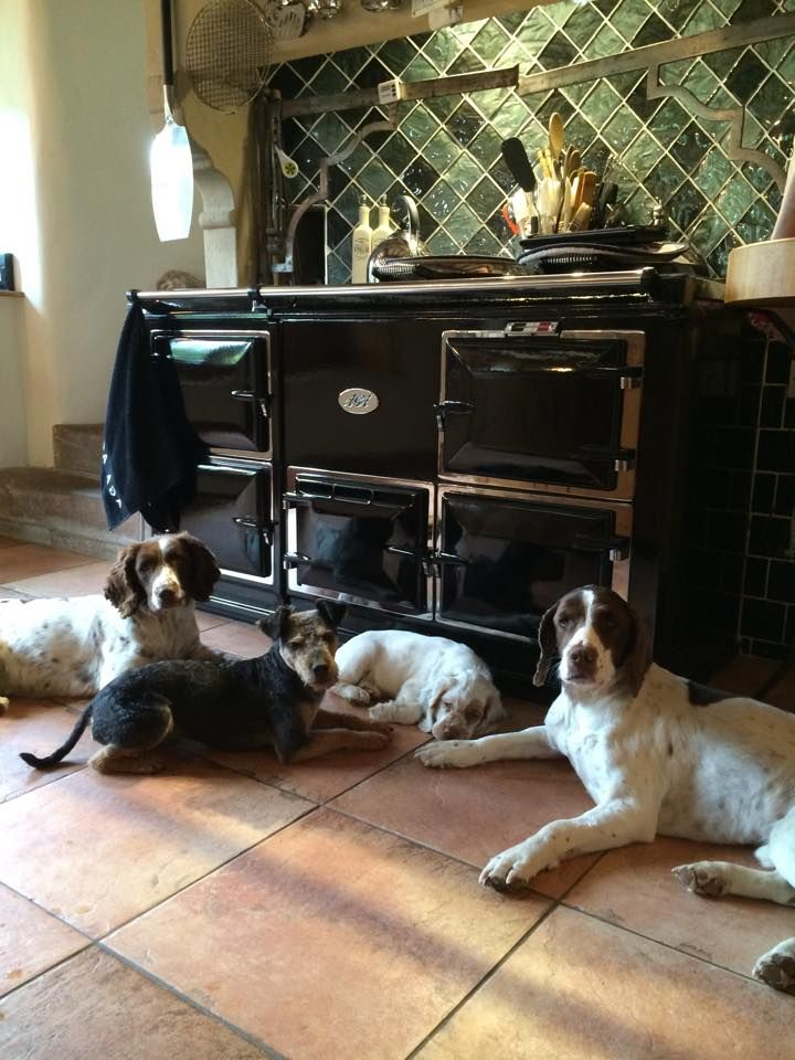 AGA always wanted this stove and the dogs