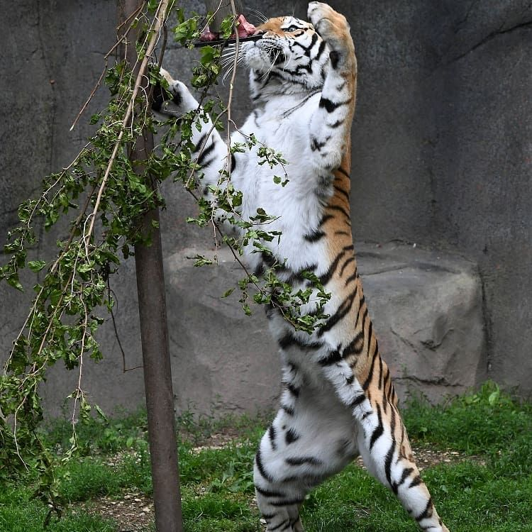 Don't miss today's fun during CatAwarenessWeekend. Visit