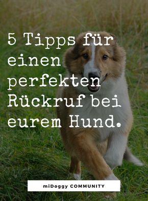 Die 5 Geheimnisse Des Perfekten Ruckrufs Hunde Hunde Korpersprache Hundchen Ubung