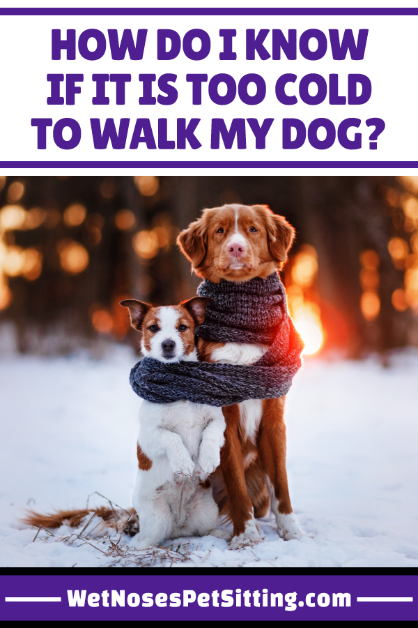 How Do I Know If It Is Too Cold To Walk My Dog Wet Noses Pet Sitting Training Your Dog Dog Cold Your Dog