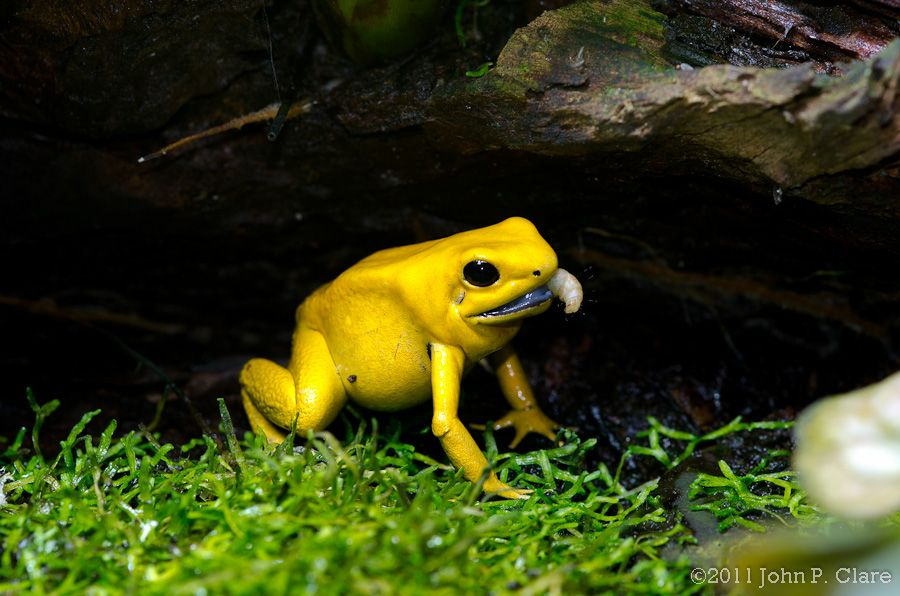 Image result for poison dart frog natural habitat