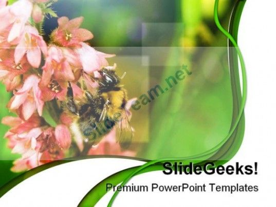 Bumble Bee Nature PowerPoint Templates And PowerPoint Backgrounds - nature powerpoint template
