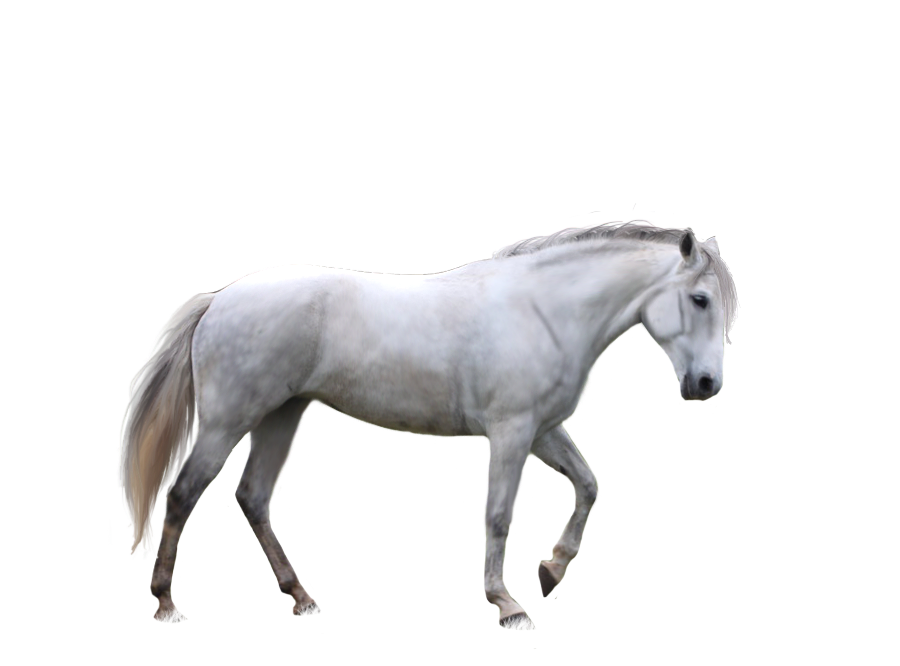 Horse Png Image Free Download Picture Transparent Background Horses Free Download Pictures Download Pictures