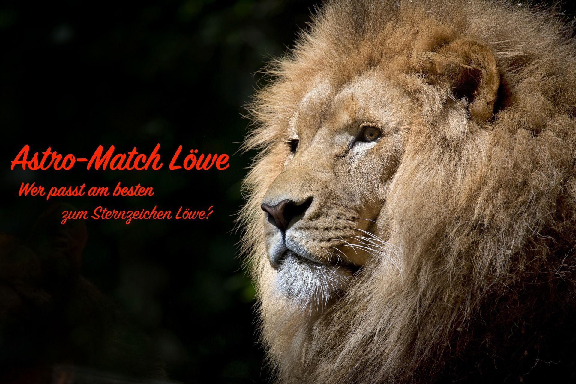 Du bist Löwe oder kennst einen Löwen?🤔 Erfahre wer am