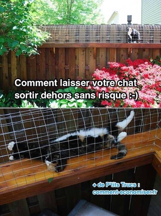 Comment laisser votre chat sortir dehors sans aucun risque - Comment eloigner les chats de mon jardin ...