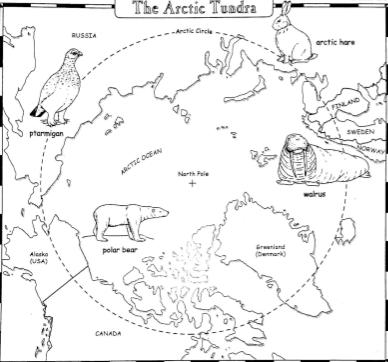Mrs. Brooks 5th Grade Class Arctic Tundra in 2020