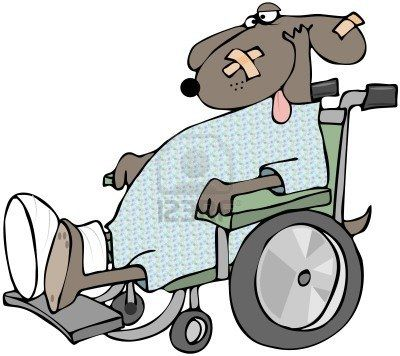 Sick Dog In A Wheelchair Stock Photo