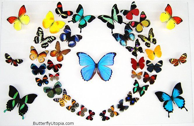 I love this butterfly art! :)