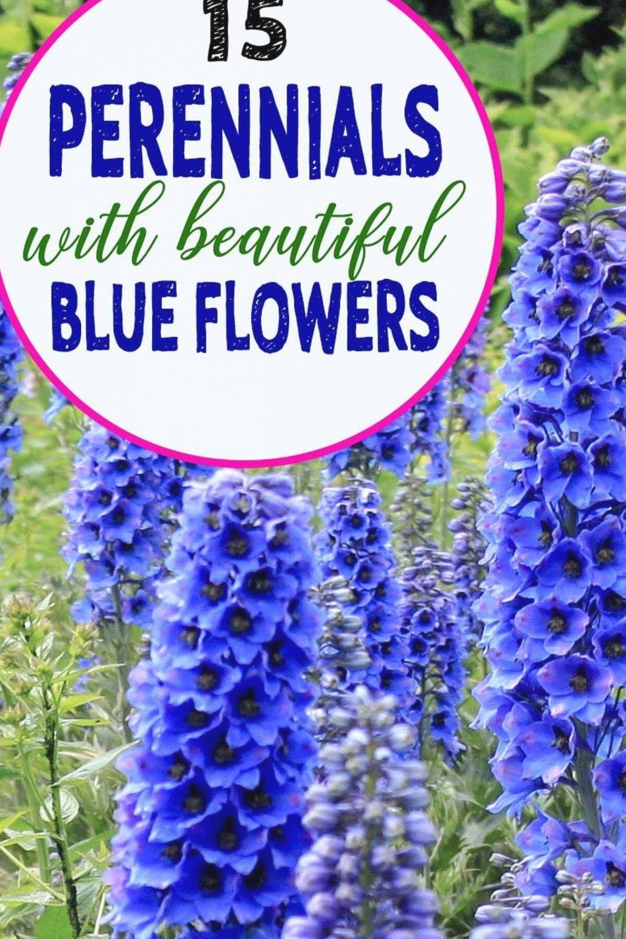 Fromhousetohome Maintenance Gardenideas Blueflowers Perennials Flowers Require Provide Planted Plants Mehrjahrige Pflanzen Stauden Bluhende Pflanzen