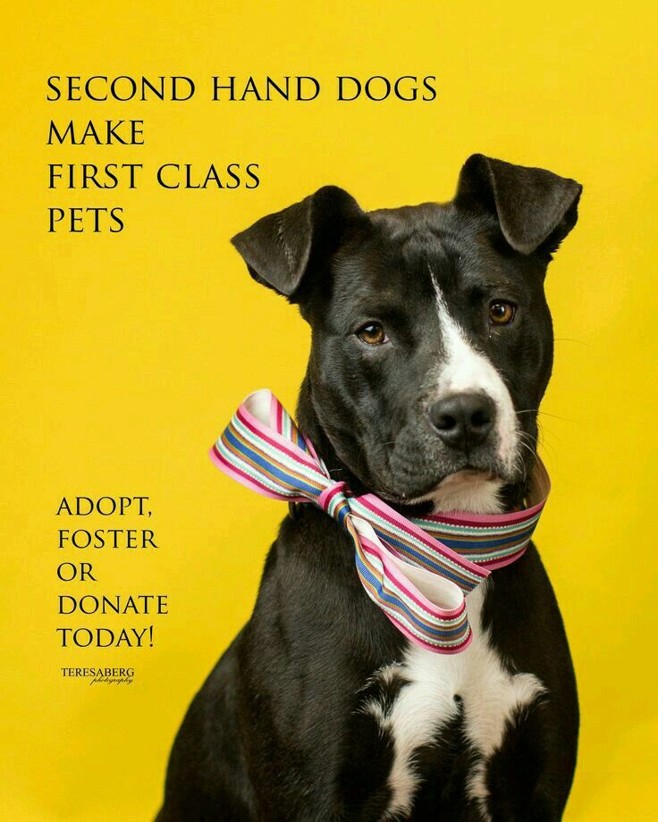 Pin By Sydney Welch On It S All About The Dogs Class Pet Rescue Dogs Pet Adoption