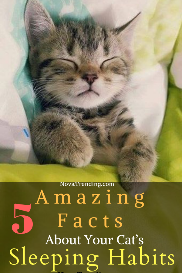 5 Amazing Facts About Your Cat S Sleeping Habits Cat Sleeping Cats Cat Behavior Problems